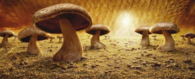 Mushroom-Savanna3